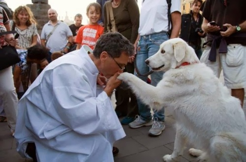 thumb_640_foto-animal-pastor