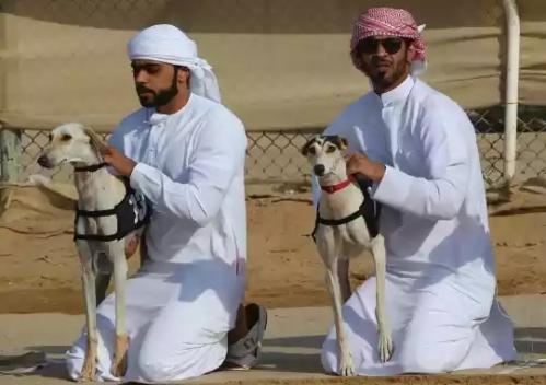 20160212002338-balap-anjing-saluki-trend-hobi-baru-para-pemuda-arab-003-dru